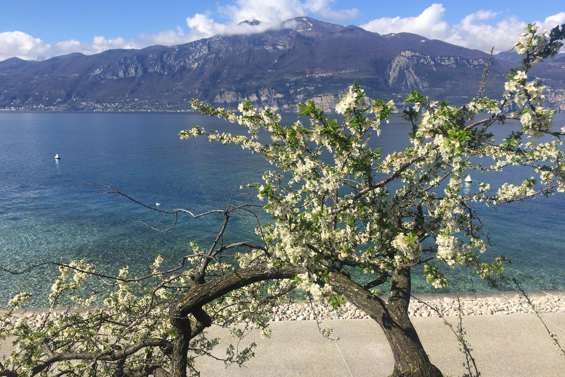 primavera-sul-lago-di-garda_alla-caletta-hotel-bolognese.jpg